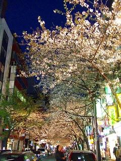 八重洲さくら通り夜桜