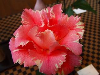 バラ職人新種のバラ3