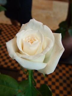 バラ職人新種のバラ5