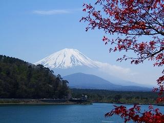 精進湖からの富士1