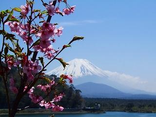 精進湖からの富士2