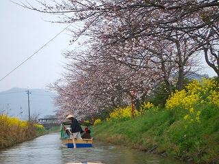 近江八幡 水郷の春