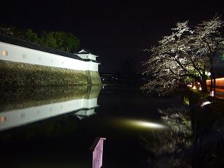 彦根城のお堀の夜桜2