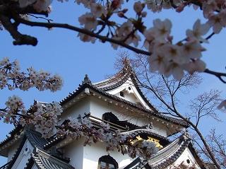 天守閣と桜2