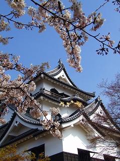 天守閣と桜3