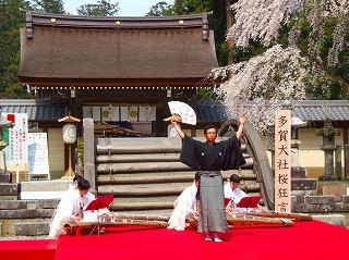 多賀大社神橋桜狂言1