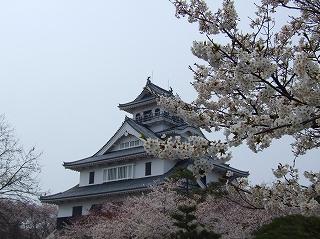 長浜豊公園の桜1