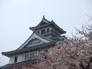 長浜豊公園の桜2
