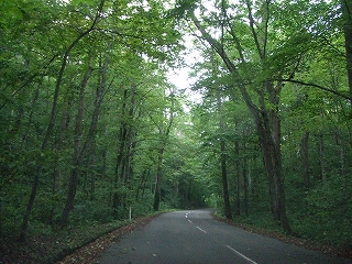 十和田の森