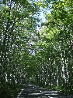 八甲田の森