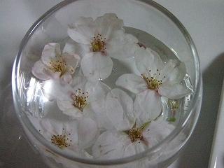 拾ってきた桜